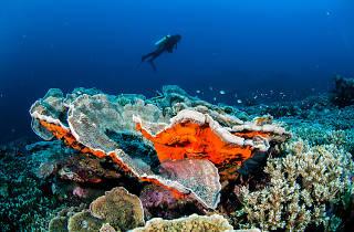 Banda Island diving