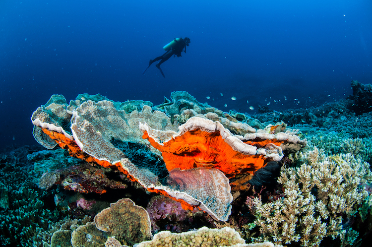 The best diving spots in Southeast Asia