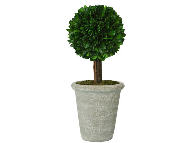Smith & Hawken Boxwood Topiary