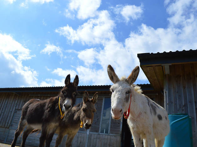 The Donkey Sanctuary, eitw