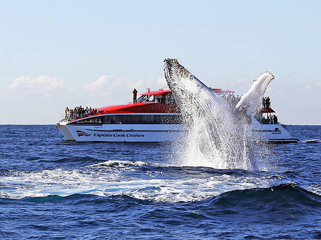 Whale watching cruise, eitw