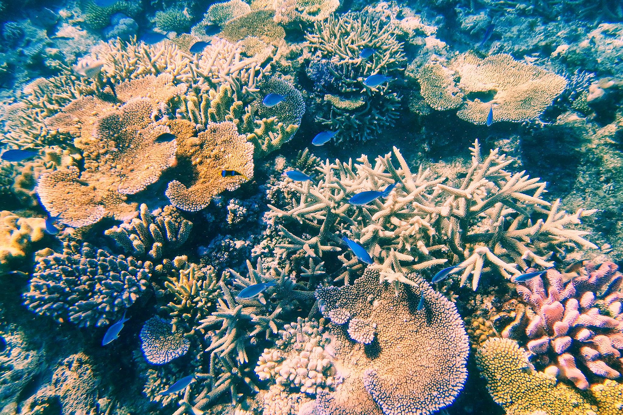 Coral Coast, eitw