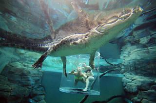 Crocosaurus Cove, eitw