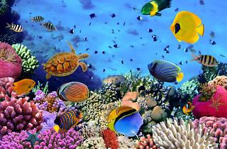 Great Barrier Reef, eitw