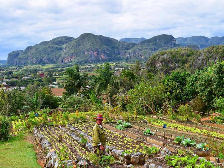 Finca Paraiso Agroecologica, Viñales