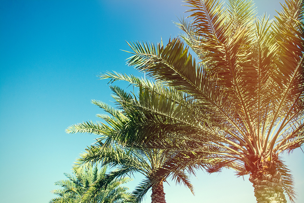 The best summer events in Miami