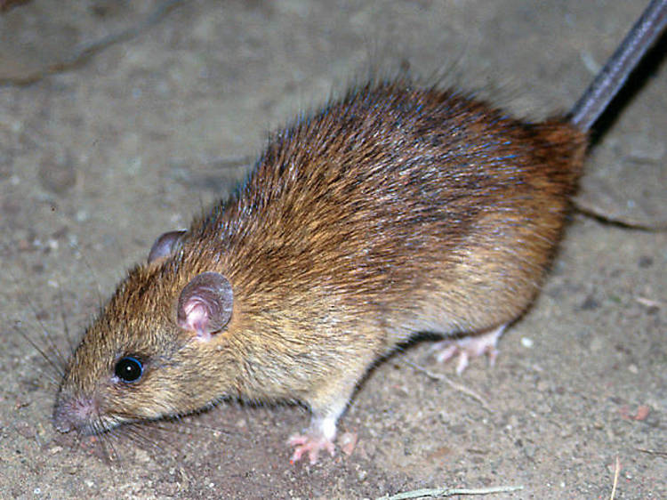 Rodents and insects