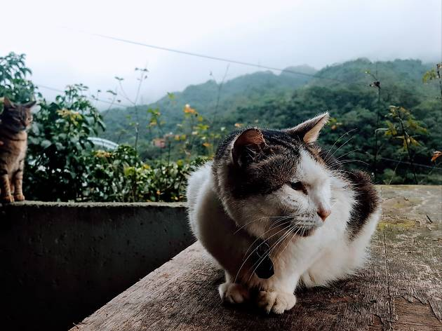 Houtong Cat Village