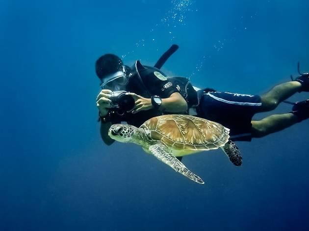 Pulau Satang Besar swim turtle