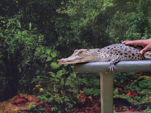 Langkawi Croc Adventureland