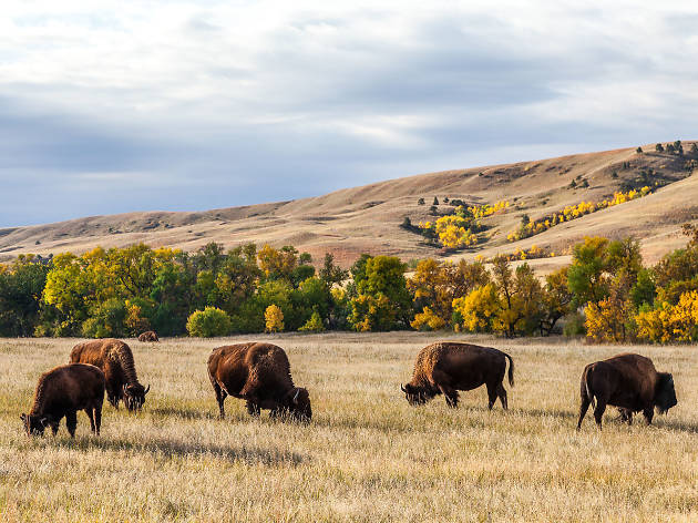 The 12 best things to do in South Dakota