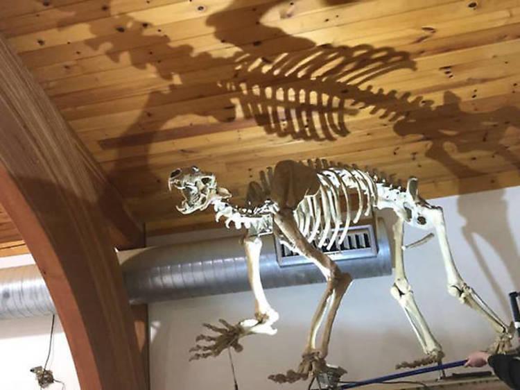 Mammoth Site & Museum