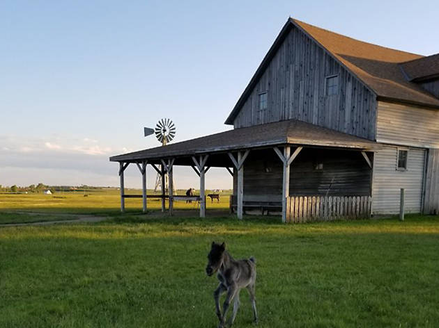 Ingalls Homestead, eitw