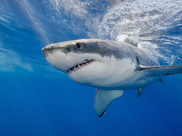 Two teens were gently gnawed by sharks off the coast of Fire Island today