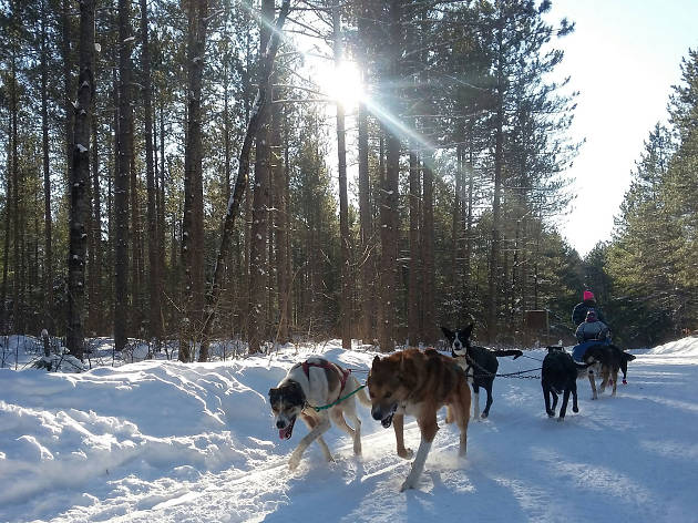 Chocpaw Dog Sledding - Ontario - Canada