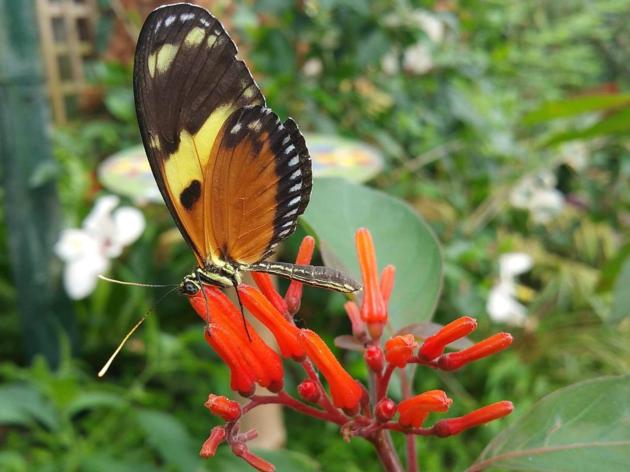 butterflyworld