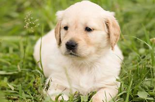 Generic puppy