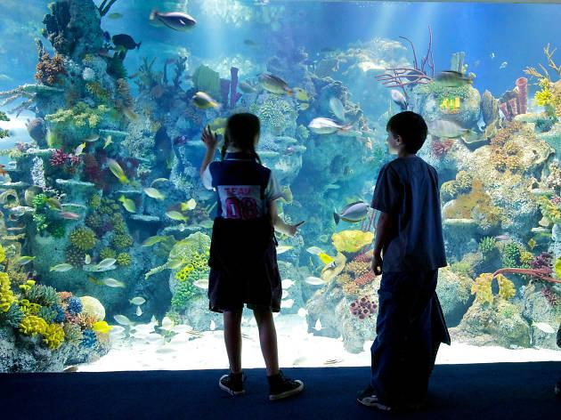 Bristol Aquarium giant viewing window