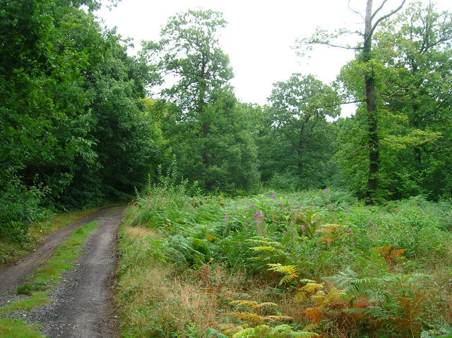 Blean Woods Nature Reserve