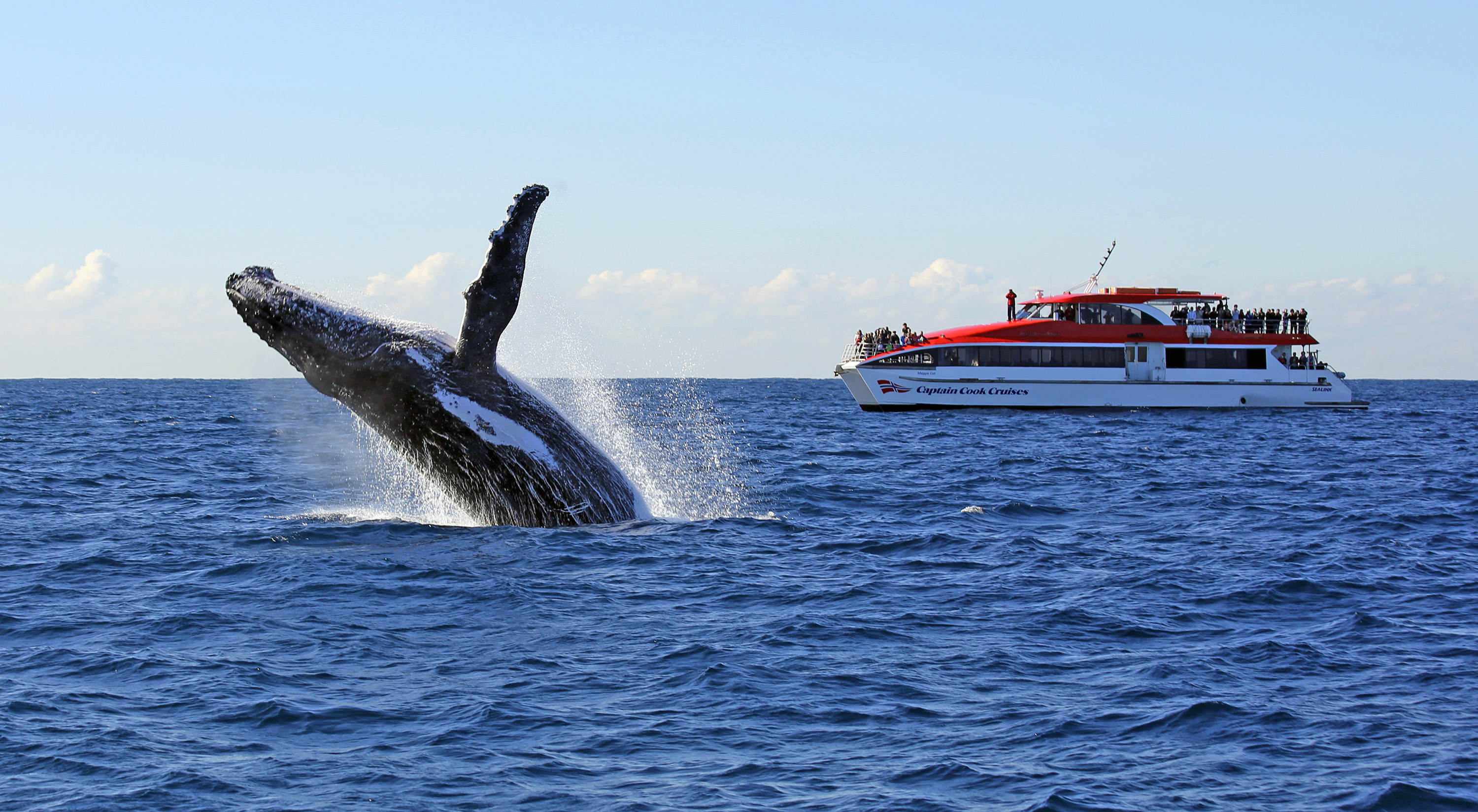 Whale jumps in front of cruise vessel.
