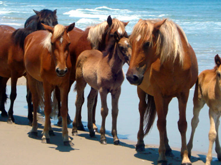 Corolla Wild Horse Fund Museum and Tours