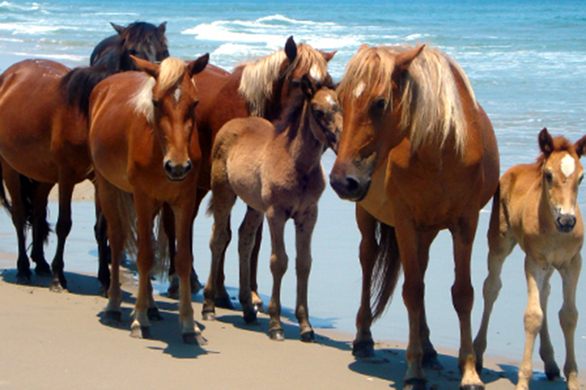 Corolla Wild Horse Fund Museum and Tours, eitw