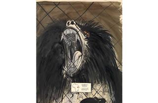 (Brett Whiteley 'Sacred baboon' 1975, © Wendy Whiteley)