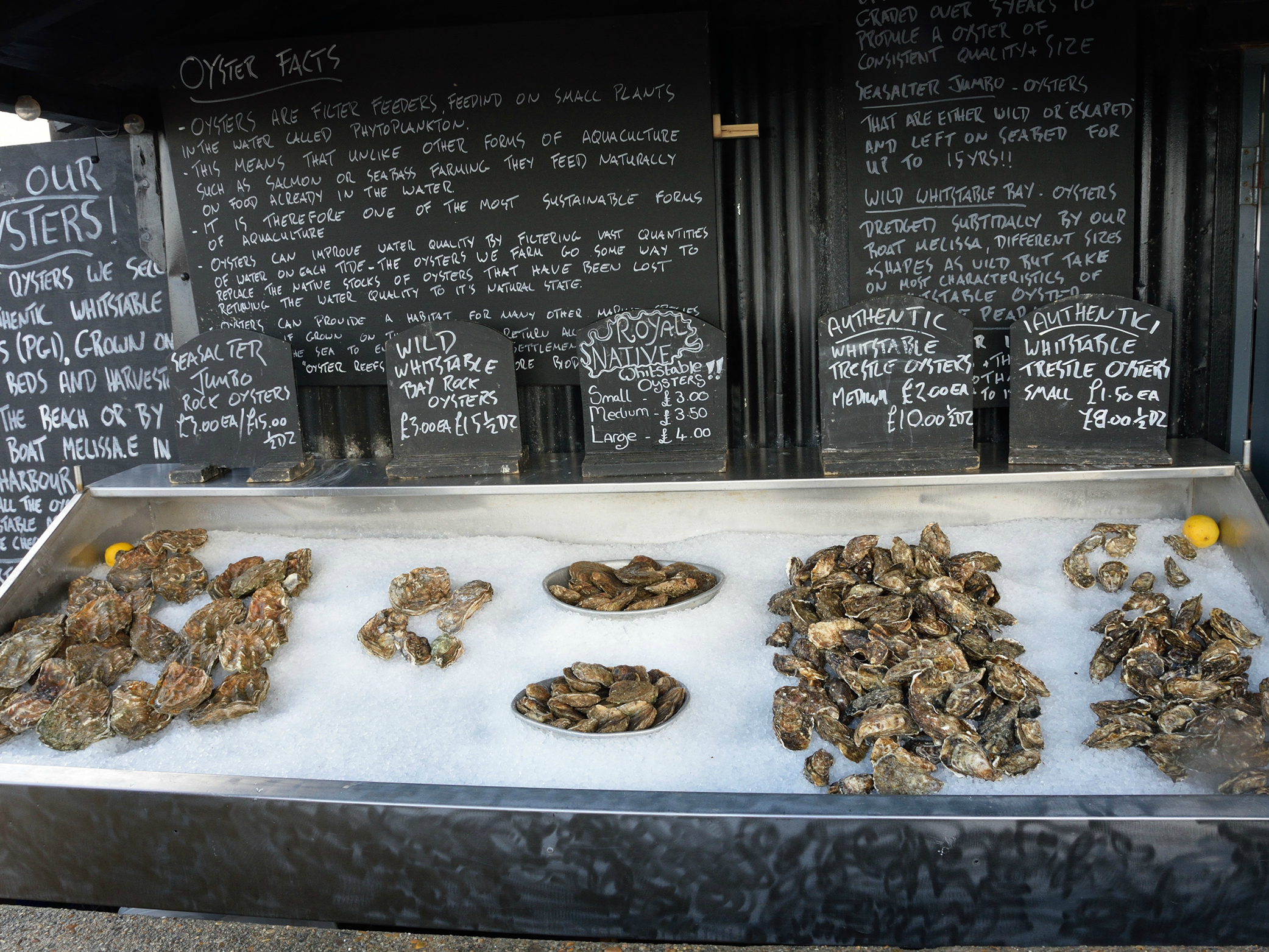 whitstable oysters