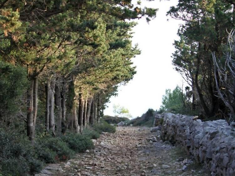 Trek through historic forest