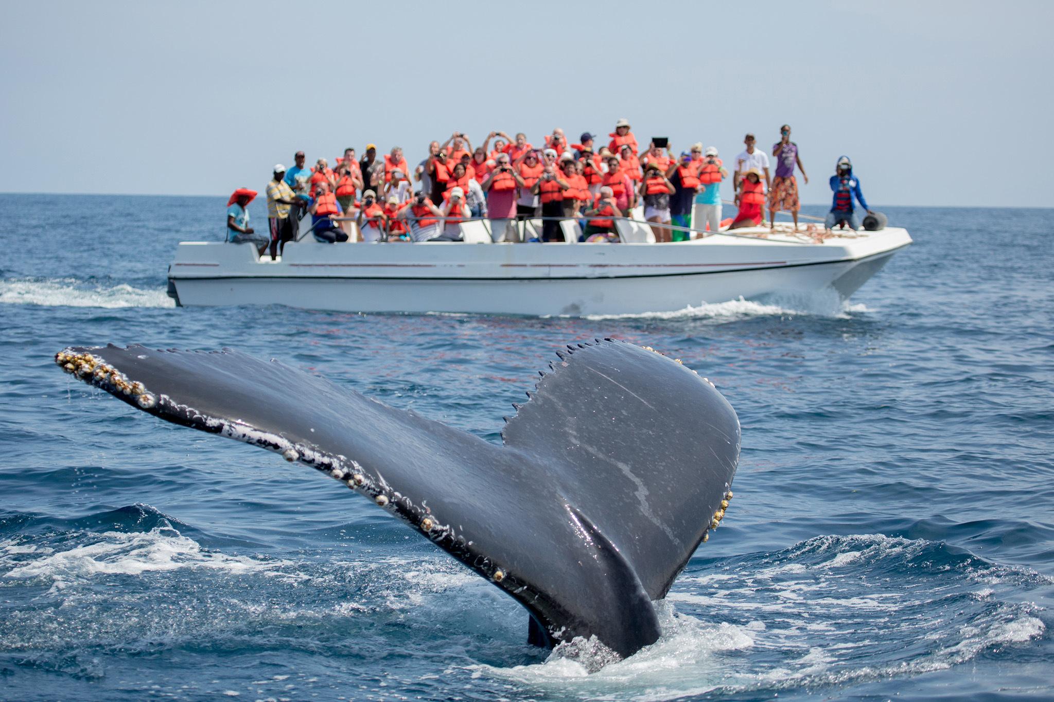 Whale Watching, Península de Samaná, eitw