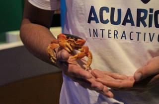 Acuario Interactivo (Foto: Raúl Fernández)