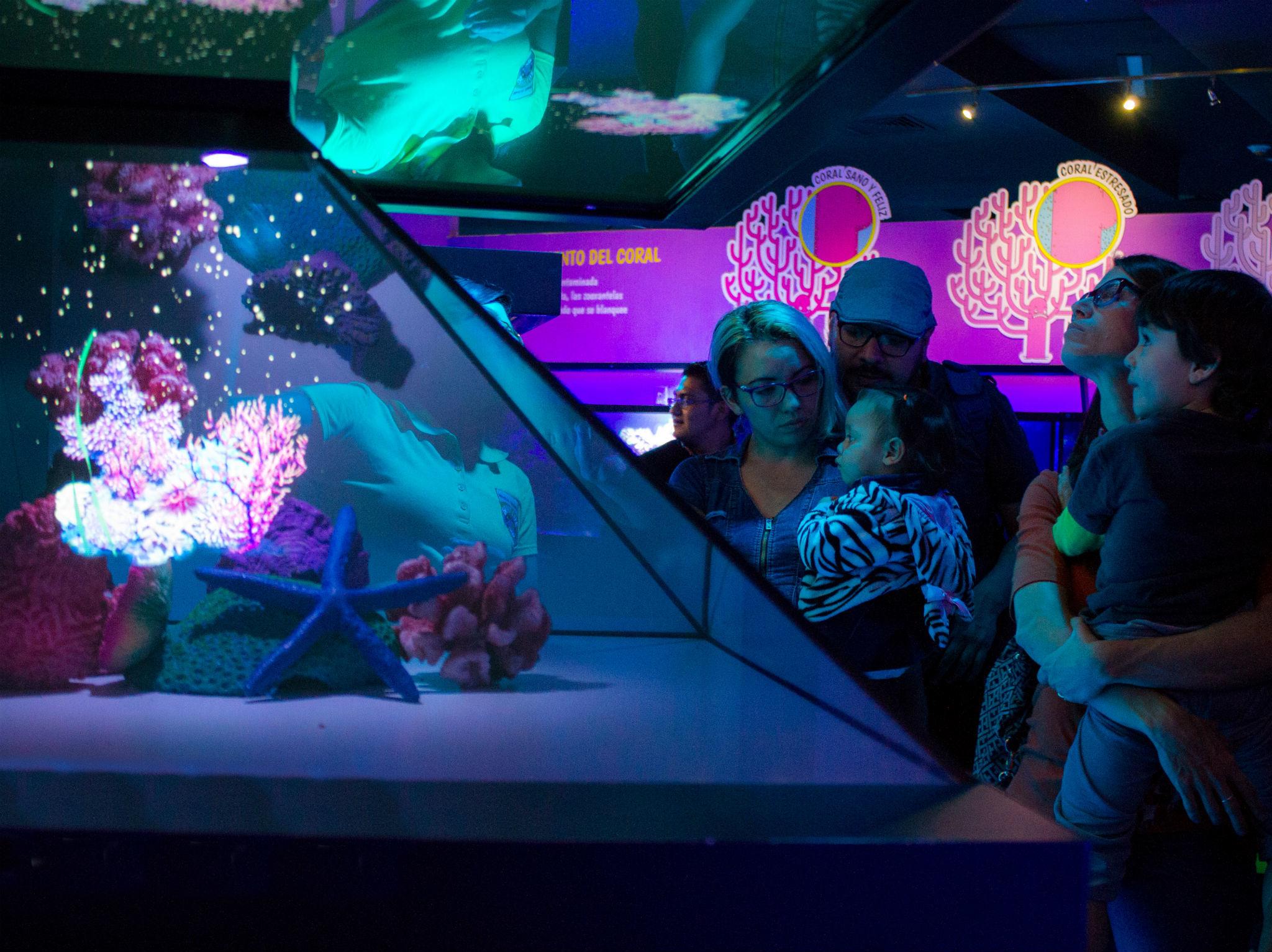 Peces en acuario interactivo