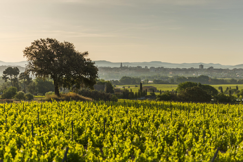 Disfruta del apasionante mundo del vino