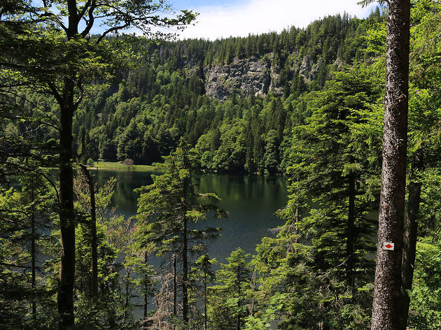 Black Forest National Park, eitw