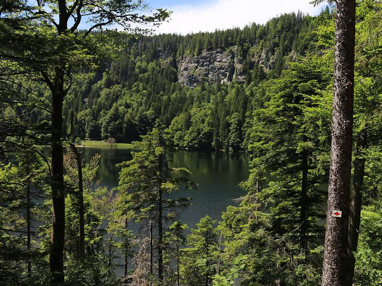 Bike through the Black Forest National Park
