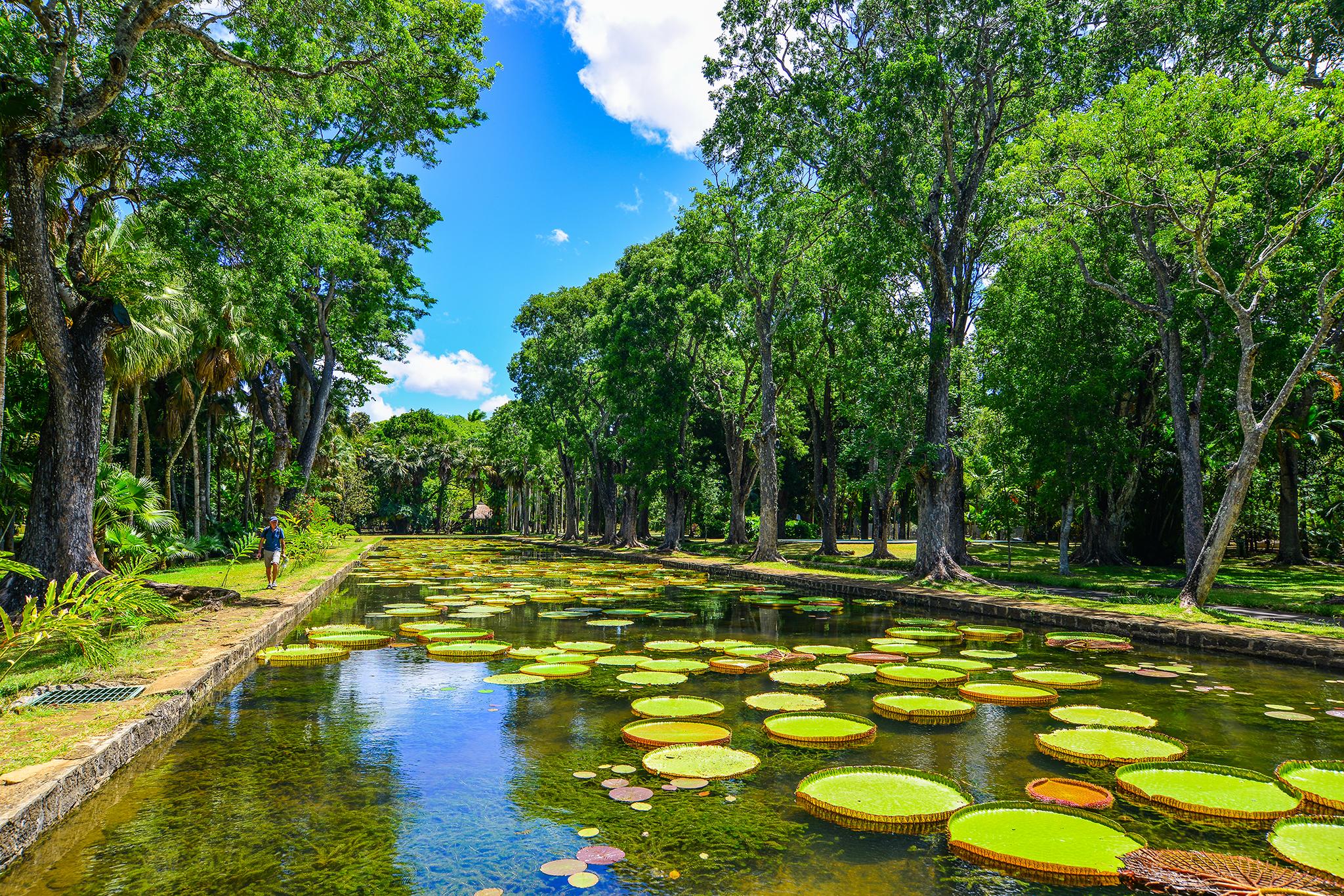 Sir Seewoosagur Ramgoolam Botanic Garden, eitw