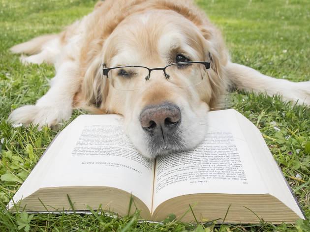 Kitap oku, sokak hayvanlarını kurtar