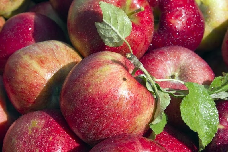 The best apple picking for NYC families