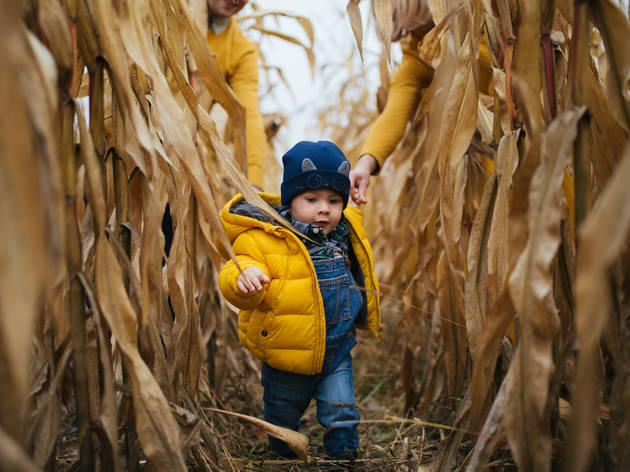 Best corn mazes NY has to offer