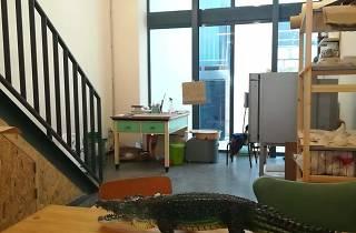 Oficina Gato Bravo