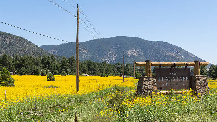 The ultimate guide to Flagstaff