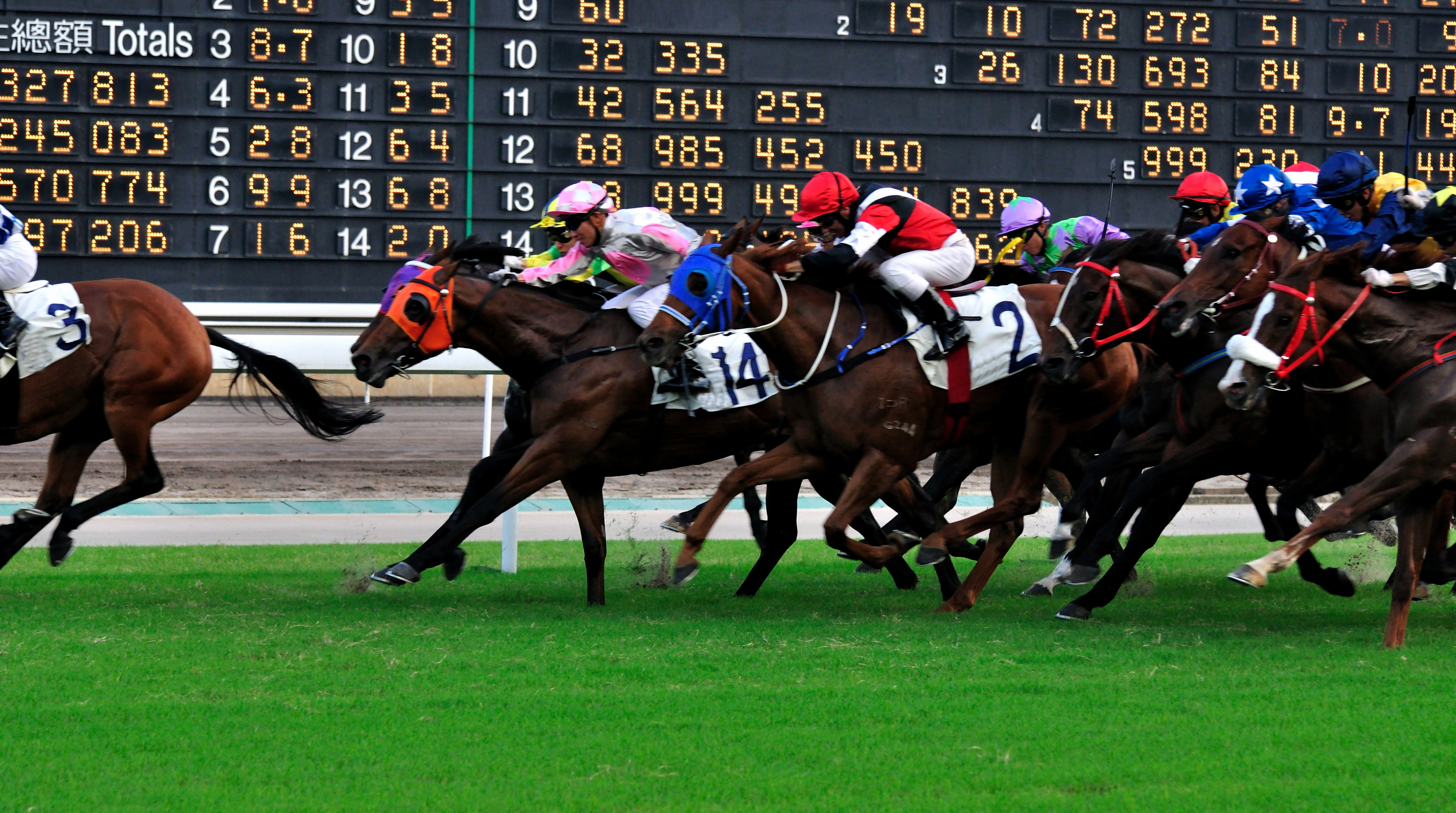 Hong Kong International Races, horse racing