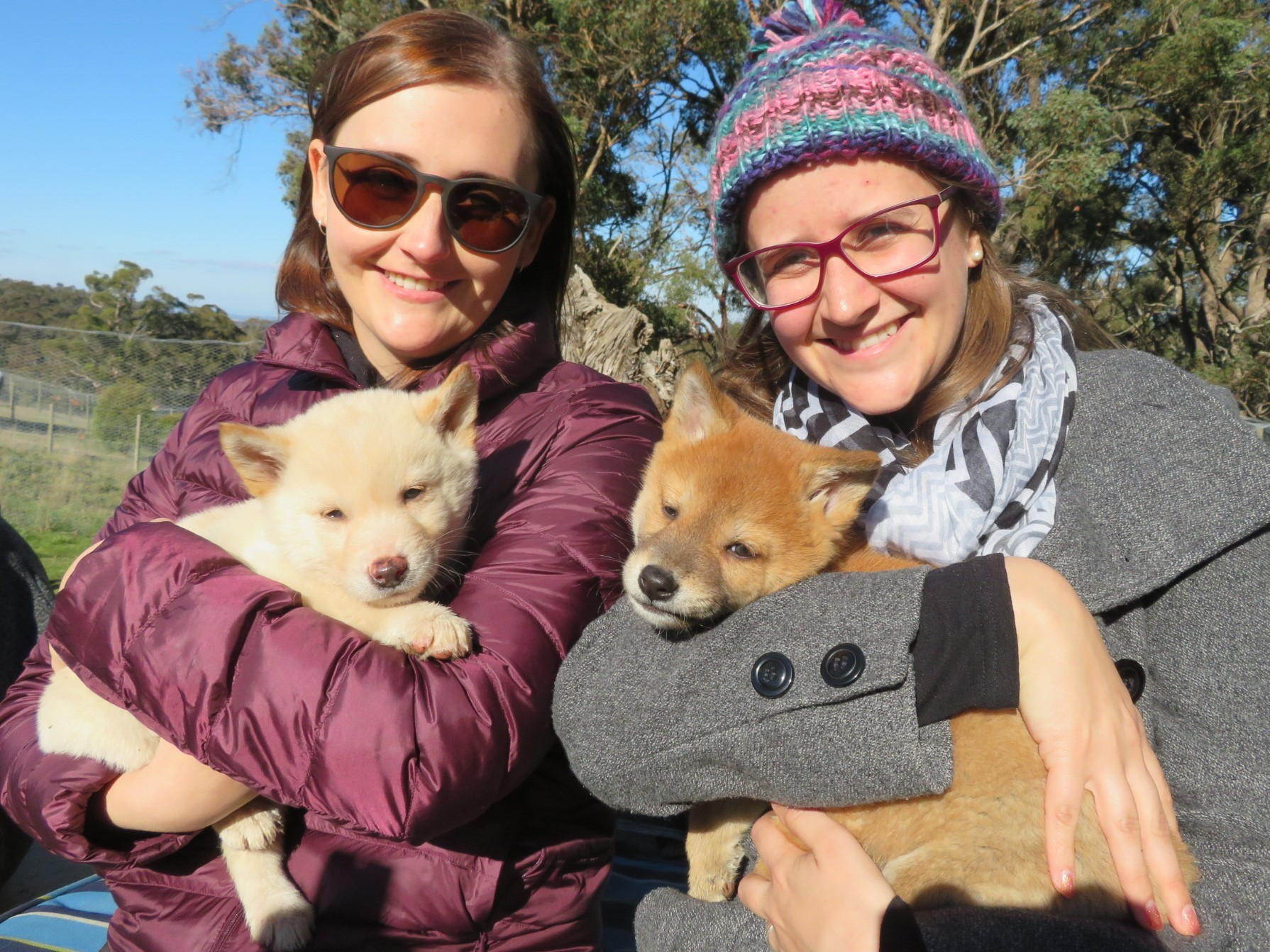 Dingo Discovery Sanctuary