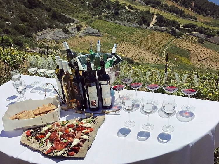 Get to know Croatian wines among the vines