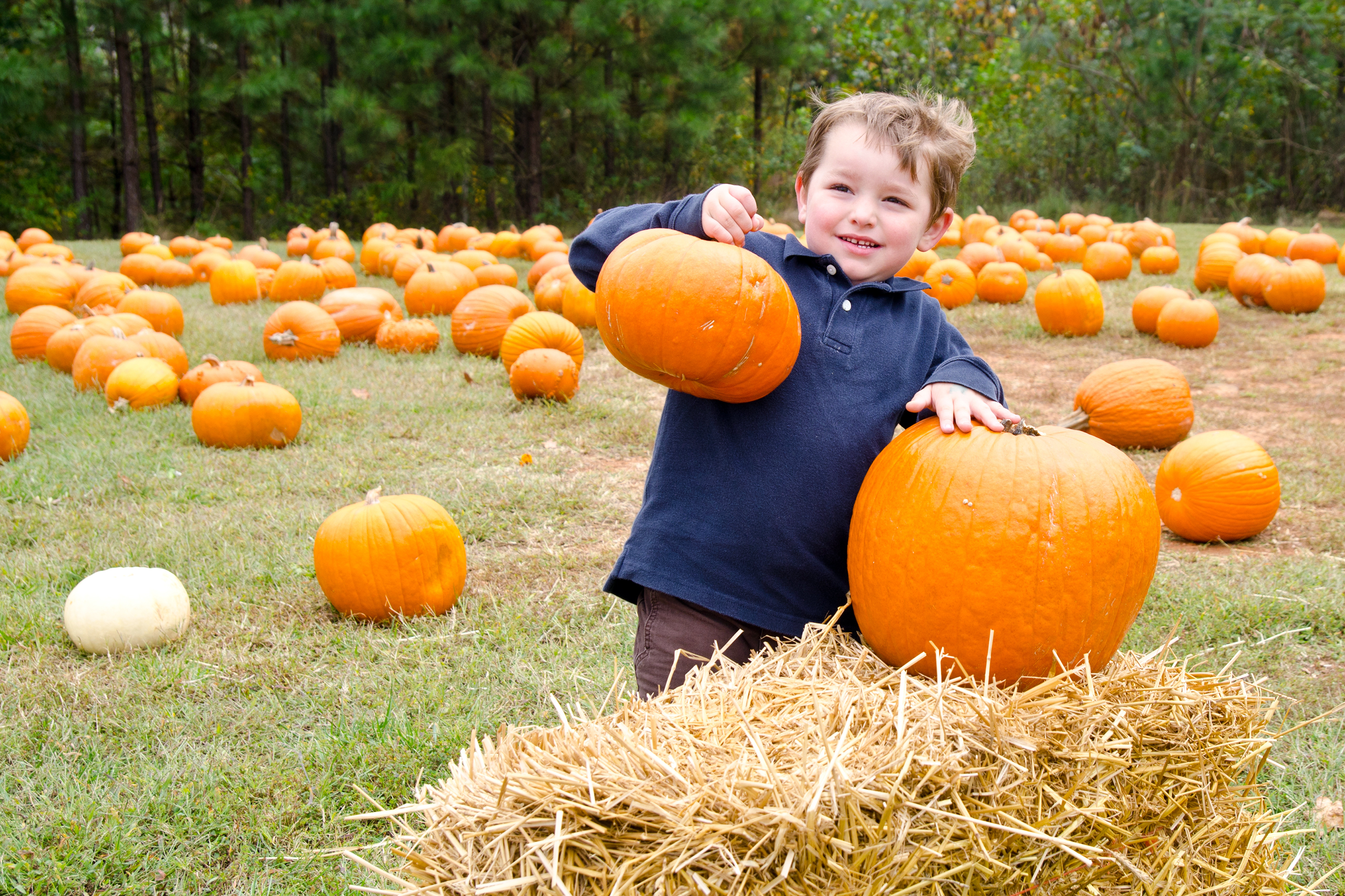 Best fall festivals and fairs for NYC families