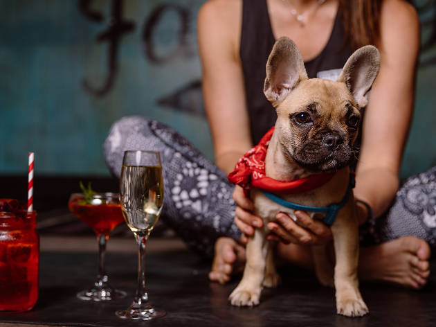 Woman holds puppy while she does yoga near cocktails.