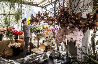 Flowers, Florist Shop, Florist