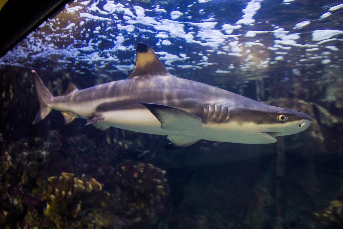 Pula Aquarium
