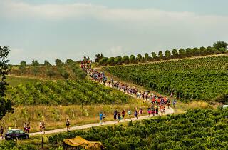 Istrian wine run