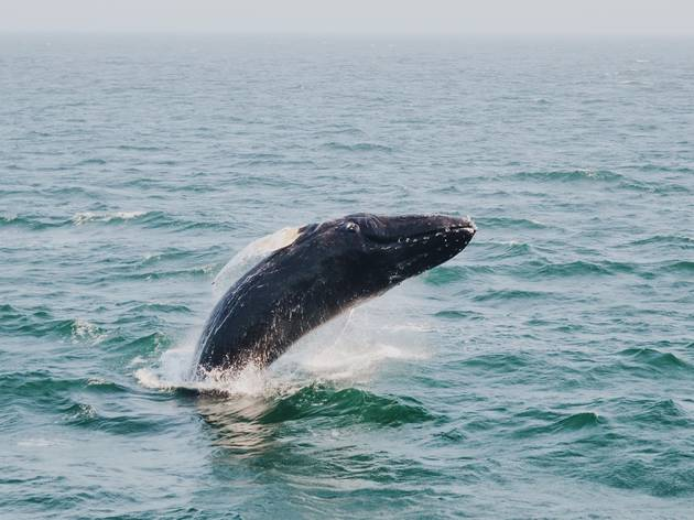 Whale swimming in the ocean